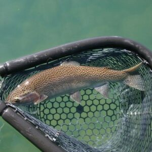 lake-trout-fishing2