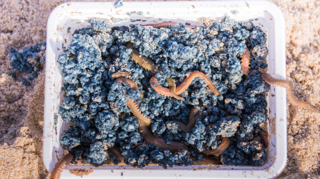 Featured Image For How to Grow Worms For Fishing: Worm Farm 101